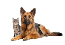 A cat and a German Sheherd dog in front of a white background