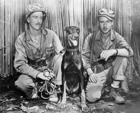 The Timid War Dog.