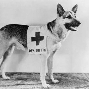 Rin Tin Tin, Part 5.