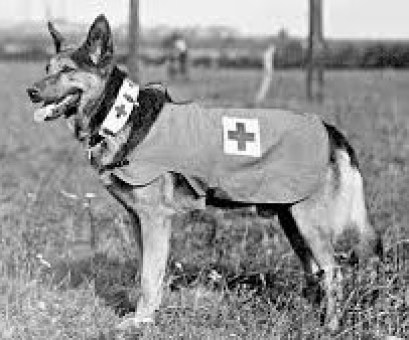 Medical Dogs.