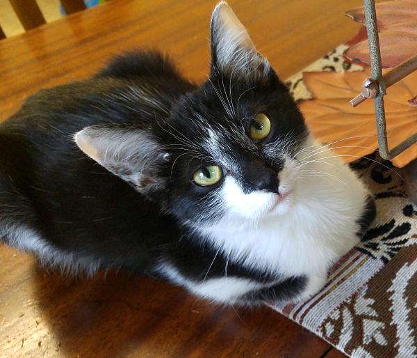 mina-fall-cat