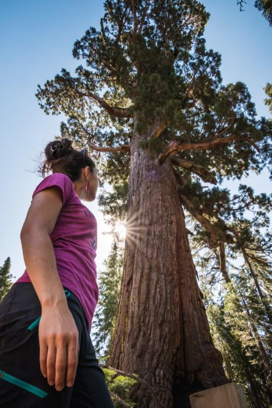 Mariposa Grove, Yosemite, Califonie