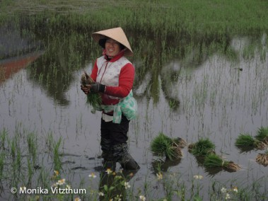 Vietnam_2020_Hoi_An-6684