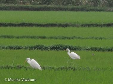 Vietnam_2020_Hoi_An-6687