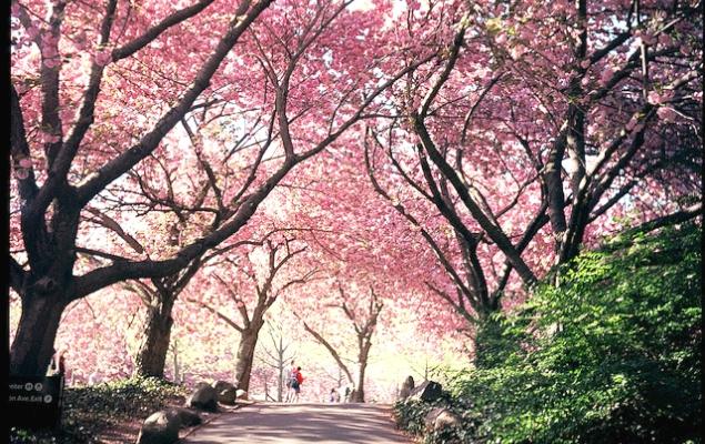 Botanic garden Brooklyn