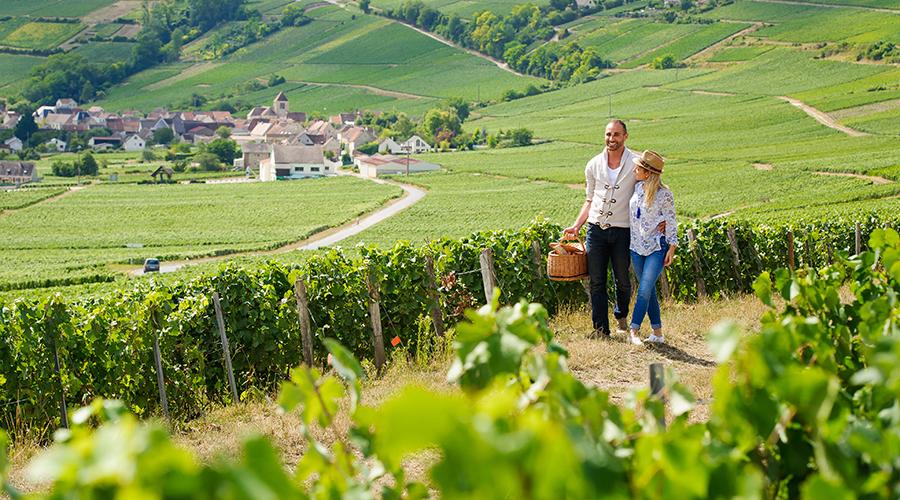 -® Randonn+®e dans les vignes de l'Aisne -CRTPicardie-comdesimages.com