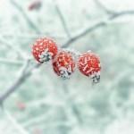 6x redenen om van de winter te houden