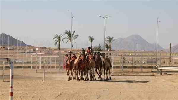 طقس حار على جنوب سيناء.. والعظمى بشرم الشيخ 36