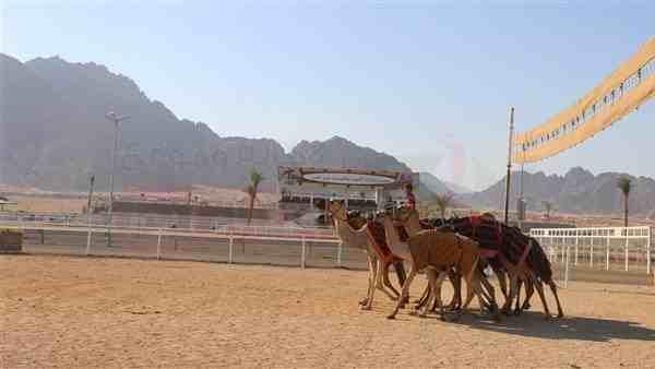 طقس حار على جنوب سيناء.. والعظمى بشرم الشيخ 34