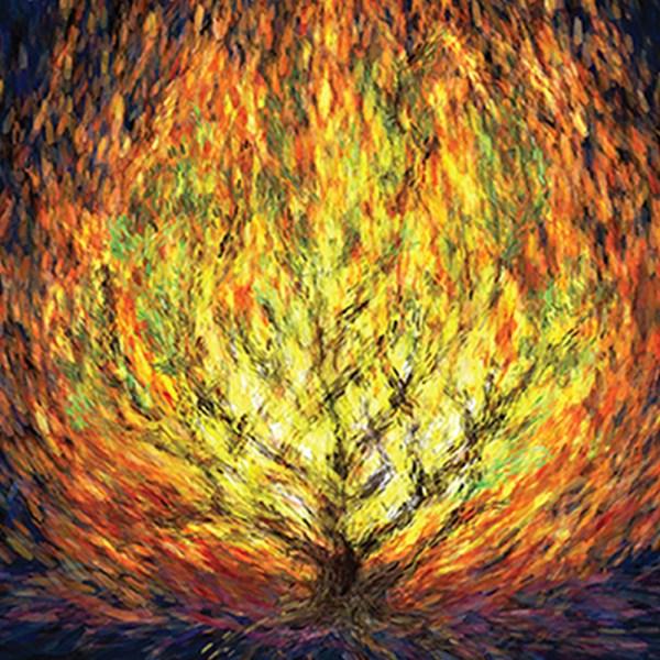 burning bush # 37