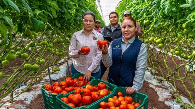 Un grupo de jóvenes trabajadores de la Agricola Behler mostrando unos tomates rojos recién cortados