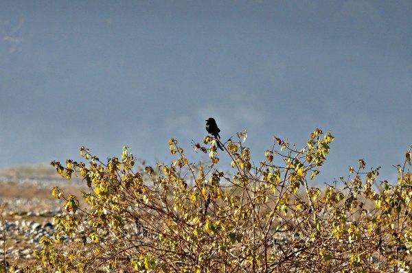Birds of Corbett