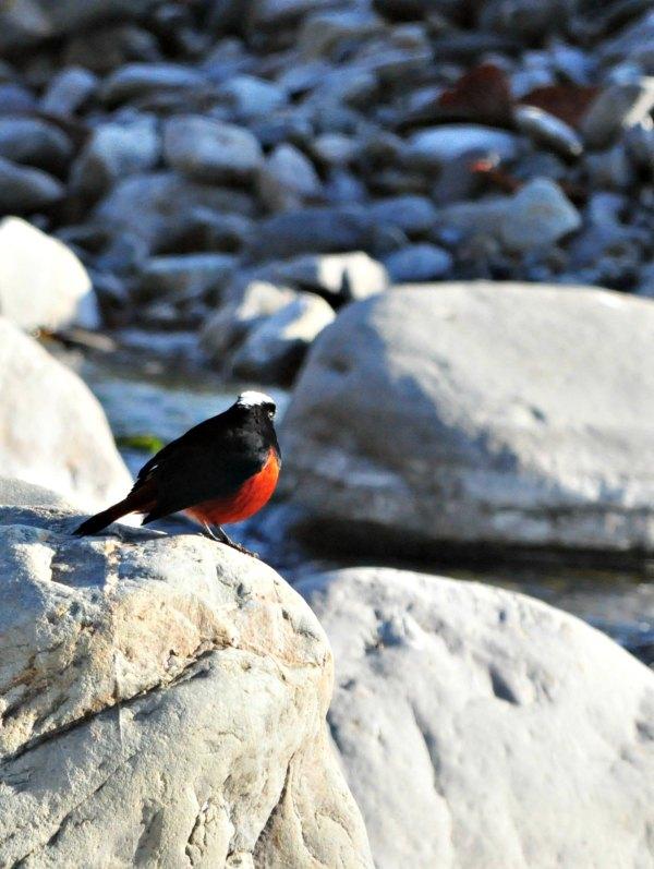 Corbett bird photo