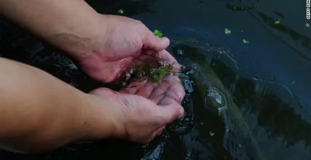 Hallan bacteria carnívora en agua potable