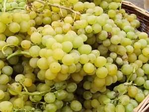 Implementan hongos para mejorar las propiedades del vino