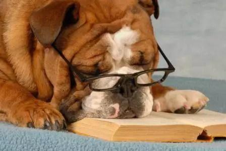 ¿El aburrimiento puede enfermar a tu perro?