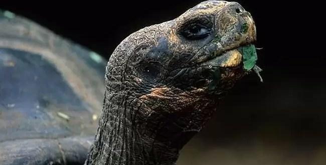 Una pareja de tortugas se divorció tras 115 años de convivencia