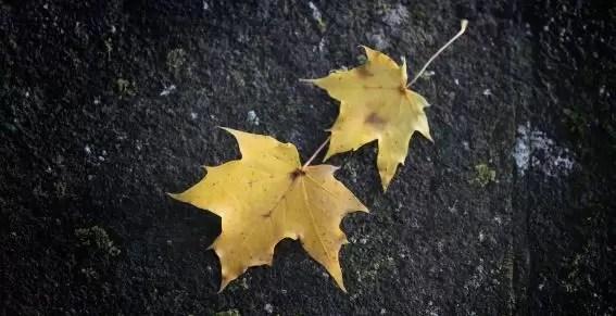 El cambio climático reduce el tamaño de las hojas
