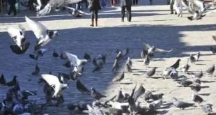 Alimentarán a los sin techo con palomas