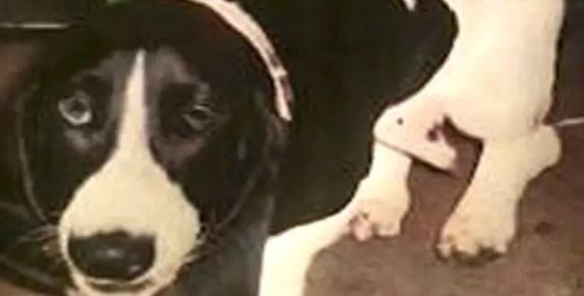 Denuncia a su marido por tener sexo con el perro