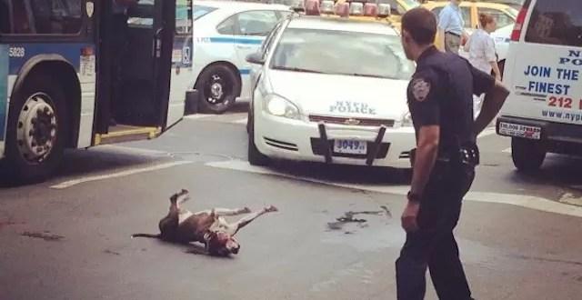 Video: Policías disparan a un perro que protegía a su dueño