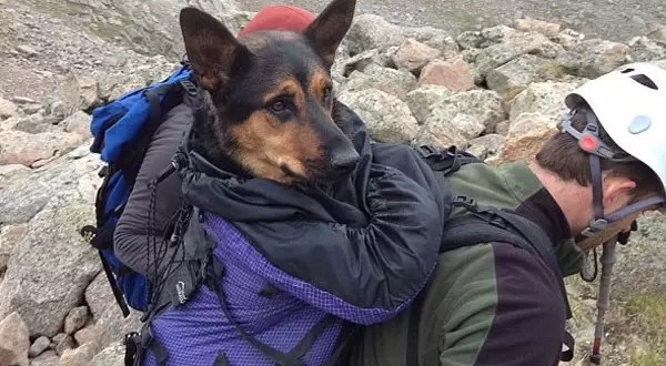 Salvó a perra abandonada en una montaña y ahora su dueño se la reclama