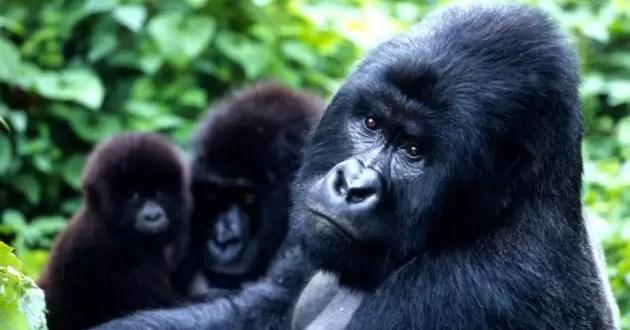 Conoce cuáles son los animales en peligro de extinción