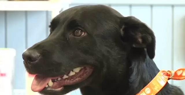 Un perro viajó 800 km para reencontrarse con su dueño