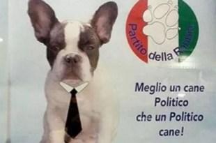 Un bulldog francés se postula para ser alcalde de Agrigento, Sicilia