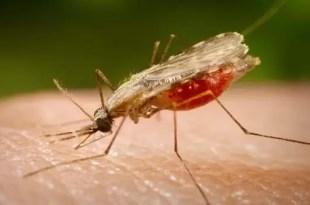 Todo lo que debes saber sobre la Malaria