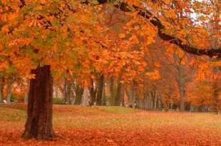 ¿Por qué el color de las hojas de otoño en América es distinto al de Europa?