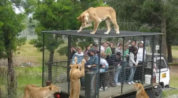 Zoológico encierra a la gente para que se conecten con animales
