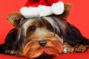 El estrés de las fiestas en los animales ¿Hay que medicarlos?
