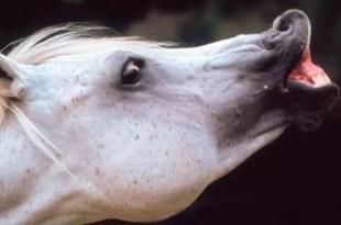 Insólito: Utilizan caballos para curar la homosexualidad