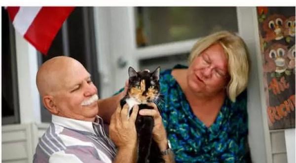 Una gata recorrió 300 km en busca de sus dueños