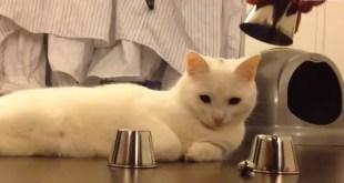 Video: Kido, el gato inteligente habilidoso en el juego
