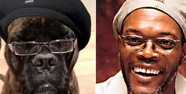 Foto: éste perro es igual a Samuel Jackson