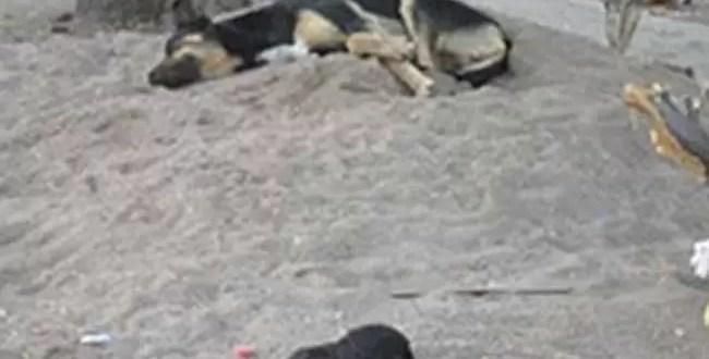 Matan más de 100 animales con albóndigas envenenadas