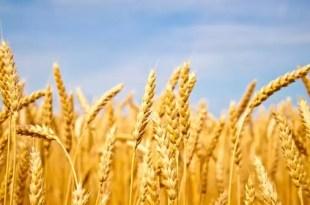En qué consiste la dieta libre de gluten