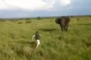 Video: Borracho se enfrenta a un elefante