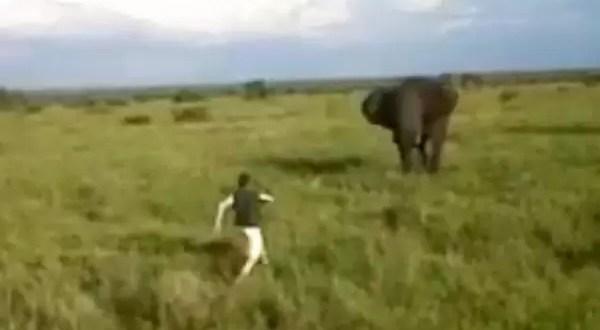 Video: Borracho se enfrenta a un elefante