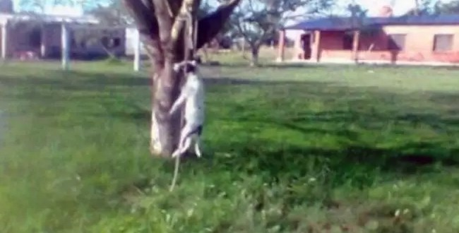 Foto: Sacerdote asesino ahorca a una perra
