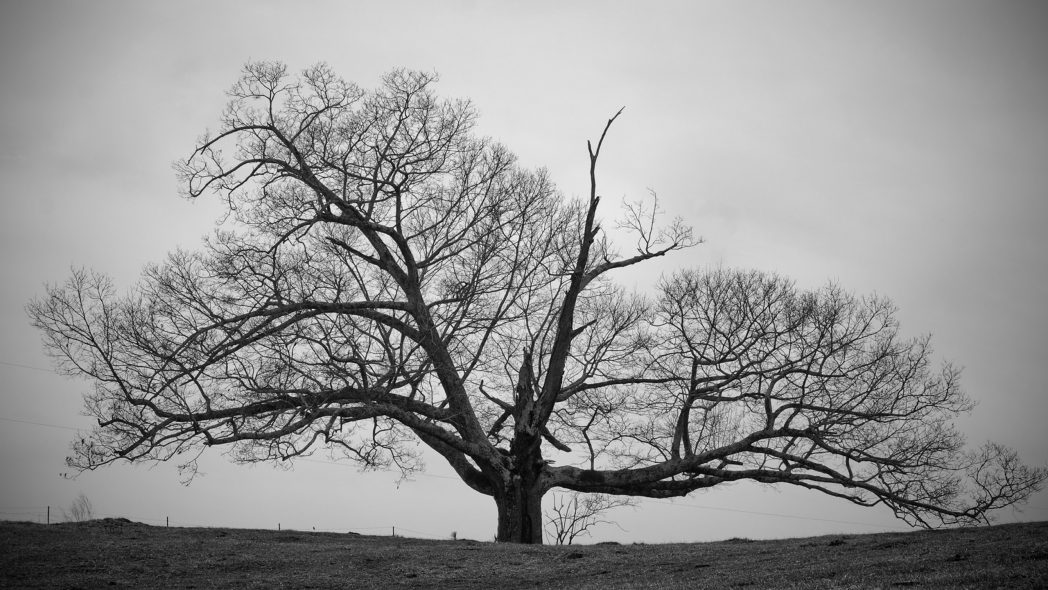 Cool Tree Black And White: Old-Tree-Black-and-White-Wallpapers-HD-hd-wallpapers-high