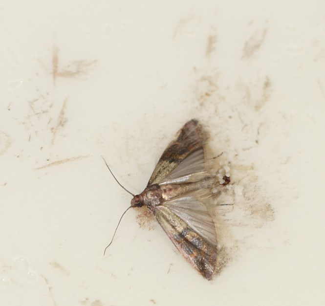 moth eggs on ceiling  taraba home review