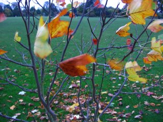 Leaves blowing in the university parks