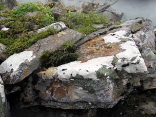 Study in lichen