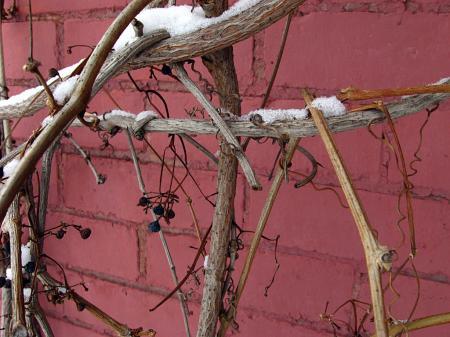 Bricks and vines