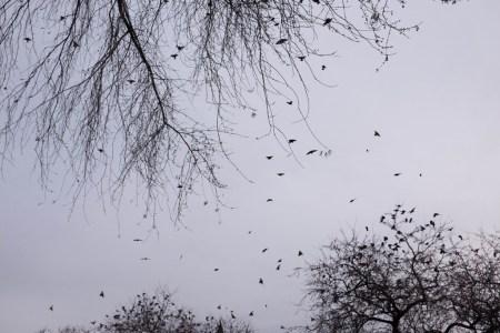 Birds flying from tree to tree
