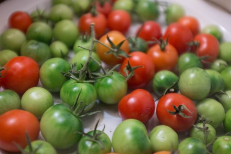 Small green and red tomatoes
