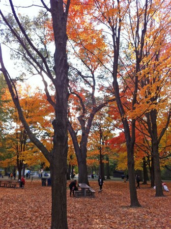High Park in the autumn